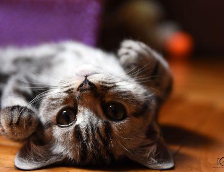 cat, macka, bast, kittybast